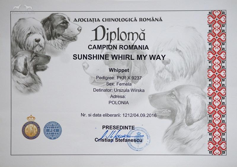 Dyplom - Champion Rumunii