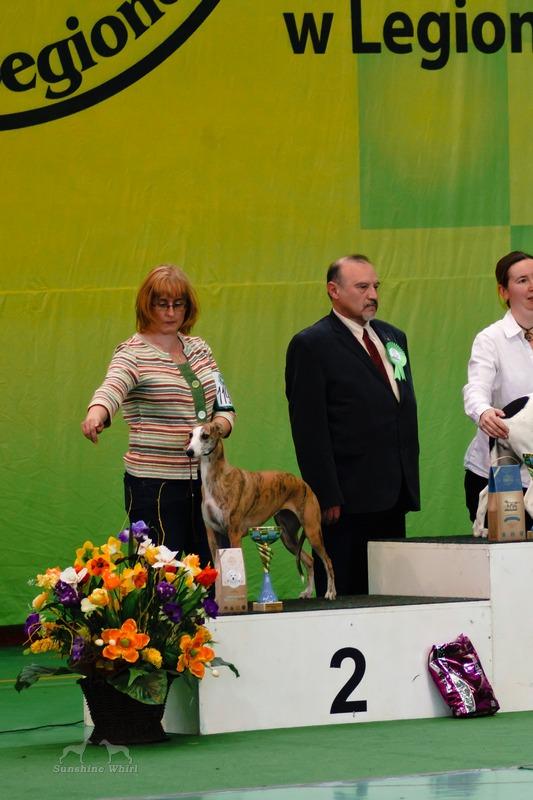 Fonia - BIS 2 psów ras użytkowych