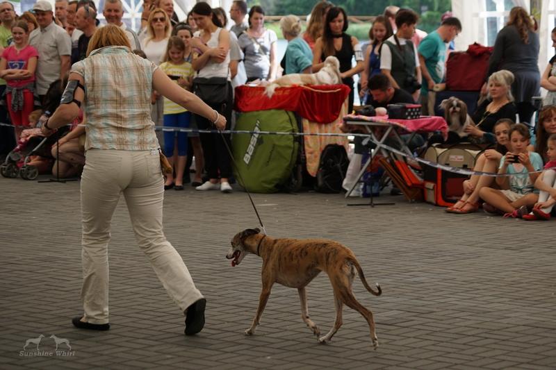 Fonia na finałach BIS psów klasy użytkowej