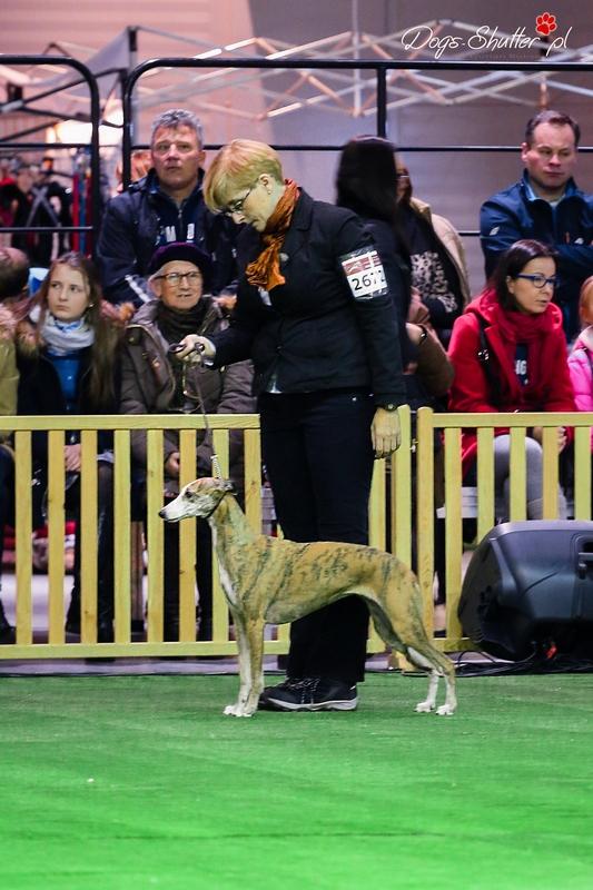 Fonia na ringu honorowym podczas finałów psów ras użytkowych