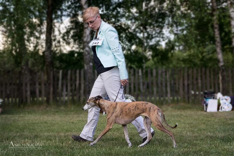 Fonia na finałach Najpiękniejszy Pies Użytkowy