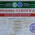 Dyplom Champion Bułgarii
